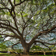 Tree Services on Oahu