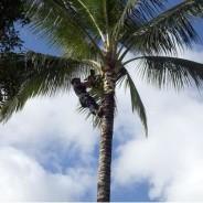 Tree Trimming Equipment