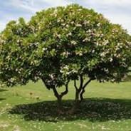 Choosing a Tree to Plant